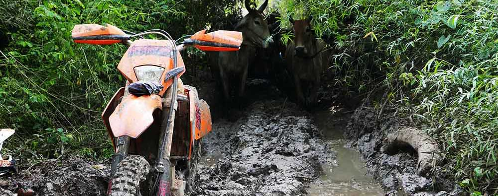 KTM stuck in a muddy bog with ox-cart waiting to pass