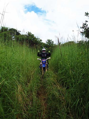 dirt-bike-tours-cambodia-bush-grass