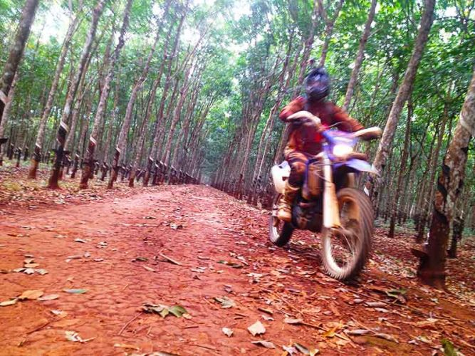 off-road-tours-cambodia-rubber-plantationz