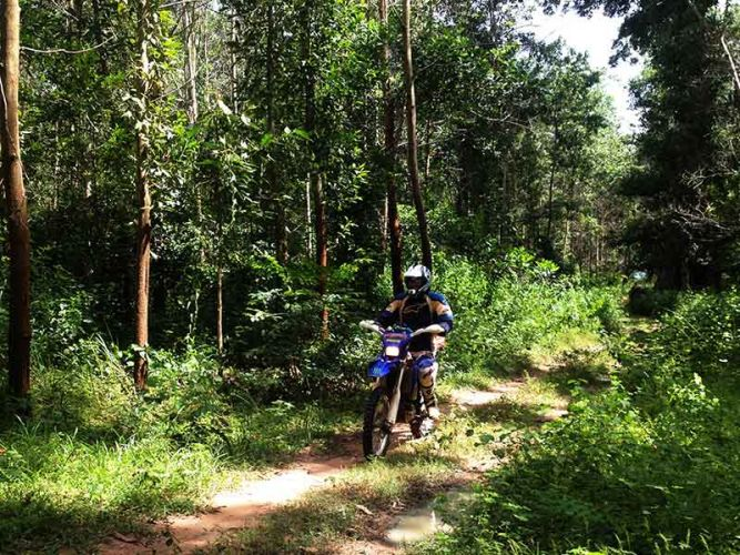 dirt-bike-tours-cambodia-forrrest