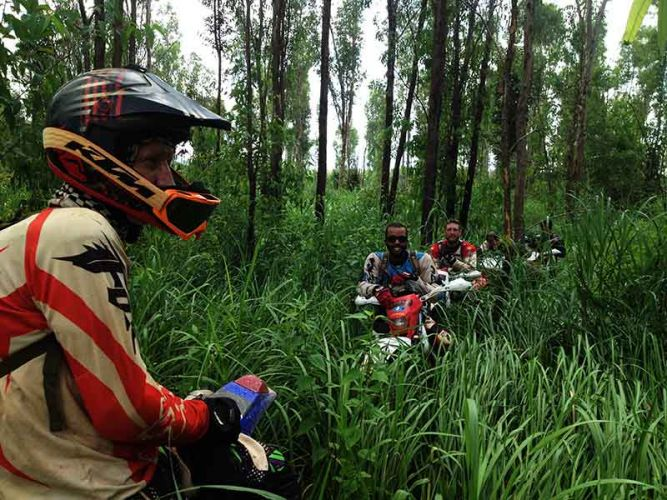 dirt-bike-tours-cambodia-elephant-grass